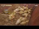 [tvN] Three Meals a Day 고창편 E05 (160729)