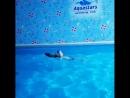 тренировки в бассейне AquaStars