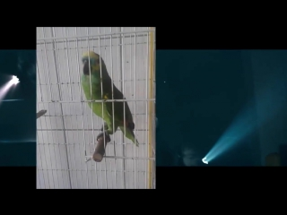 Eminem ft. Попугай (6 sec)