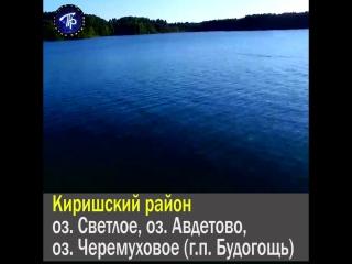Пригодные для купания озера и реки Ленобласти