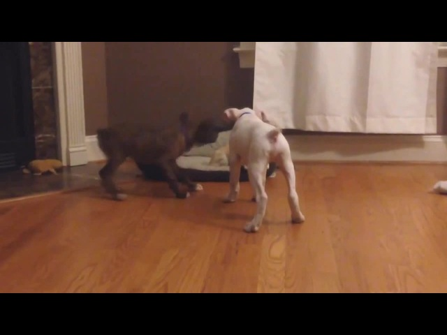 Jump Around Dog remix animal cover