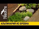 АЛЬПИНАРИЙ: как сделать из бревна композицию с альпийскими растениями - 7 дач