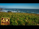 4K California Beach Fascinating Scenery Kortum Trail Sonoma Coast State Park Trailer