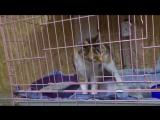 Амели, ищем семью без других животных! 04.02.17
