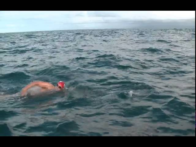 Swimming with Dolphins, Adam Walker - Cook Strait