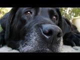 Отрезав уши и хвост, владелец собаки бросил ее умирать на улице