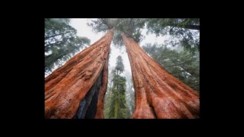 Es gibt keinen Wald auf der Erde Teil 1 - SOB edit LQ