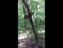 Лес Тольятти Белочки Во саду ли в огороде😊