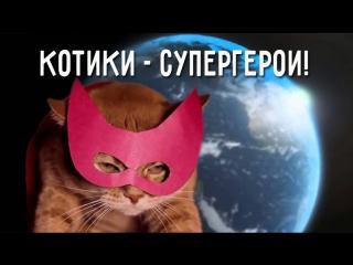 История одной девушки и ее верного кота!