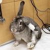 !!! Поможем кролям вместе !!!