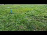 Сильный ветер - мнет и приминает траву