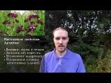 Как правильно собрать магические травы Шалфей, Душица, Полынь  Блог