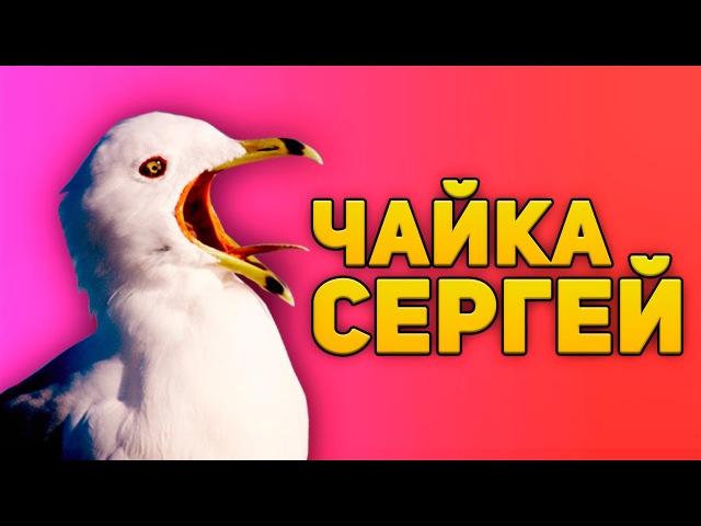 ЧАЙКА СЕРГЕЙ (CSGO)