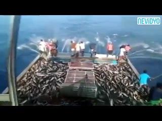 Böyle balık tutma görmediniz! - Dailymotion Video