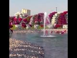 Кто бы мог подумать, что самый удивительный сад растет в пустыне! 🌷