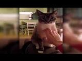 Приколы С Котами Приколы С Животными 2017 Приколы С Кошками 2017 Смешные коты Смешные моменты Видео