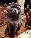 Майя Кот фото #34