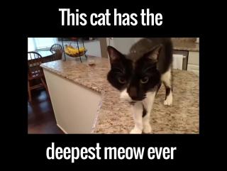 Скажи мяу! Самый брутальный кот в мире.  vk.com/cute.dogs
