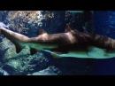 Подводный туннель в океанариуме Siam ocean world