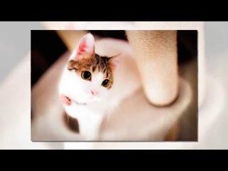 Красивые фото кошек от фотографа Seiji Mamiya