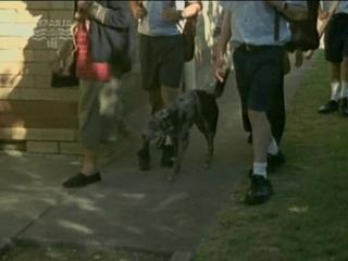 Т/С Собака по имени Снобз 7 серия (2003г)