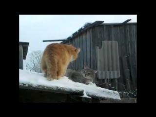 Смешные кошки приколы про кошек и котов 2017 #18 (Смешные животные ТОП)