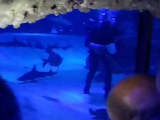 как человек кормит акул и скатов в аквариуме
