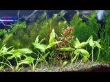 Запуск аквариума   просто и доступно  Часть 2