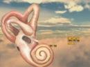 Ухо. Орган слуха человека. Развитие. Гистологическое строение. Учебный фильм.