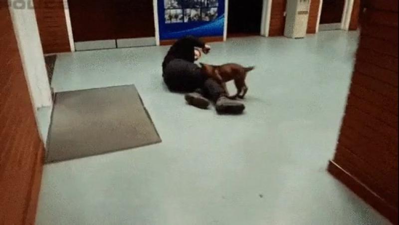 Первое задержание полицейской собакой