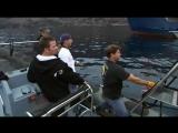 National Geographic. В поисках акул. Самые большие челюсти, Экспедиция - Белая акула (2009)