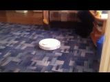 Xiaomi mi robot vacuum нападает на кота
