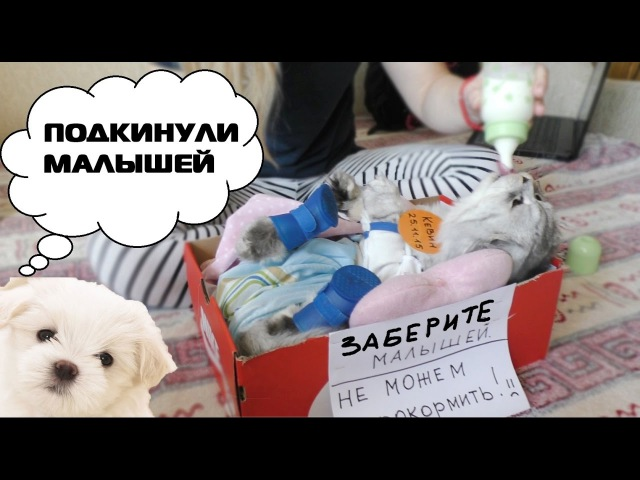 ШОК! ПОДКИНУЛИ ЩЕНКА И КОТЁНКА I добрый сериал для детей 2016