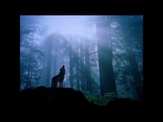 Комиссар - Волчья кровь