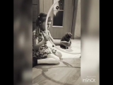 Юная дрессировщица)))