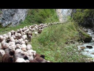 Перегон скота с летних пастбищ