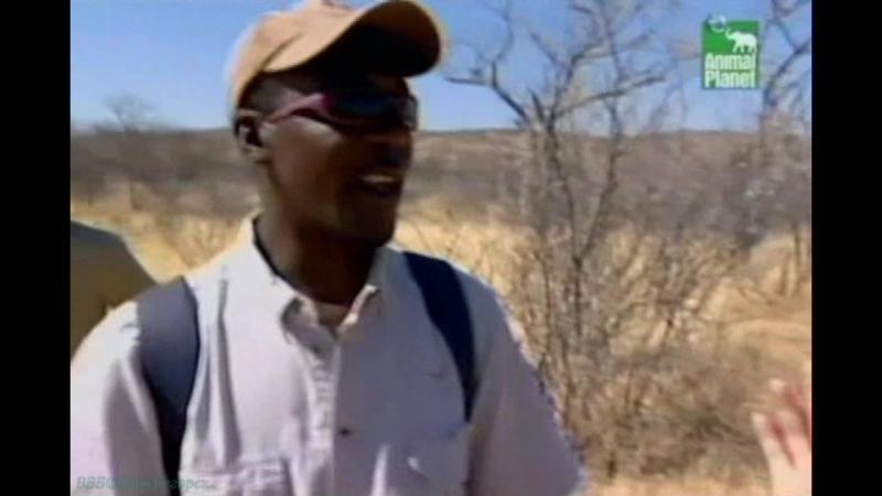 BBC «Заповедник в дебрях Африки» (16 серия) (Реальное ТВ, животные, 2006)