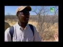 BBC Заповедник в дебрях Африки 16 серия Реальное ТВ животные 2006