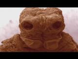 Жизнь на нашем теле - Сверхчеловек (2 серия из 2) 2014 / HD 720