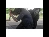 The Walking Dead Vines - Sasha Williams x Michonne x Carol Peletier Panda