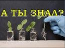СТИМУЛЯТОРЫ роста для растений. Применять или нет