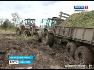 Вести-Хабаровск. Заготовка силоса
