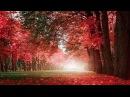 Beautiful Relaxing Music: Romantic Piano Music, Violin Music, Cello Music, Guitar Music ★74