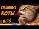 Смешные Кошки И Коты ДО СЛЁЗ Приколы с Кошками и Котами 2017