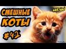 Смешные Коты Кошки Свежак Приколы ДО СЛЁЗ С Кошками