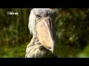 Дикая река Конго Река чудовищ 2013 HD 720p