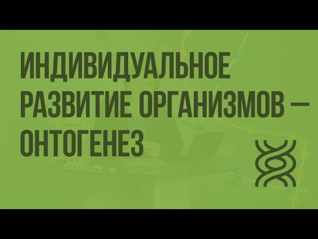 17. 9 класс. Индивидуальное развитие организмов - онтогенез.