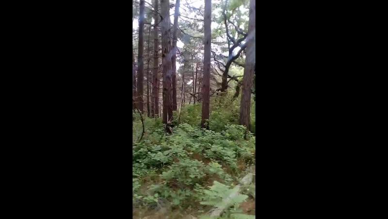 гуляем по лесу) гоу с нами!