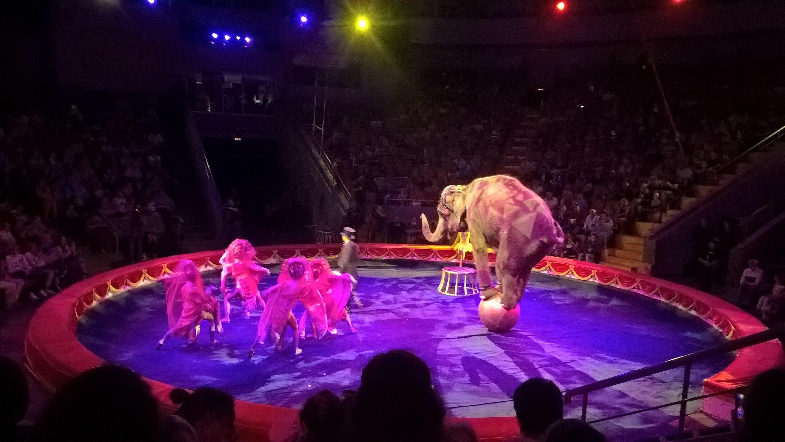 Нижегородский цирк вновь распахнул свои двери для солнечных ребят и их семей