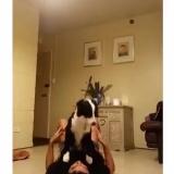 Акро йога с собаками
